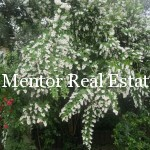 Dedinje 430sqm house with swimming pool for sale or rent (54)